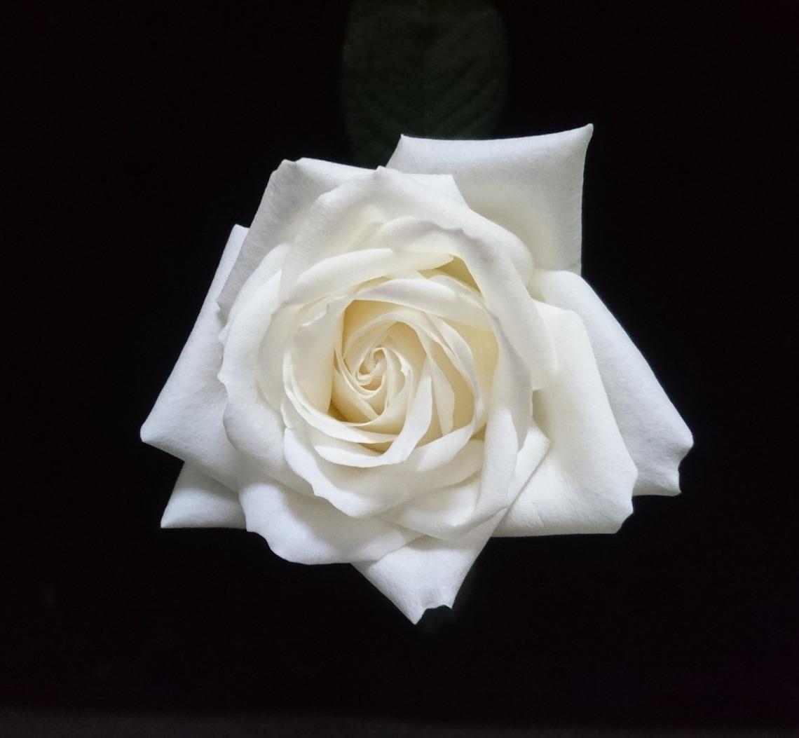 rose-3274095_1920